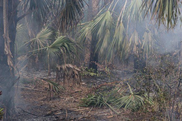 Natsacha Libbert Bushfire