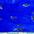 Detail Koen Vermeule Flock 2