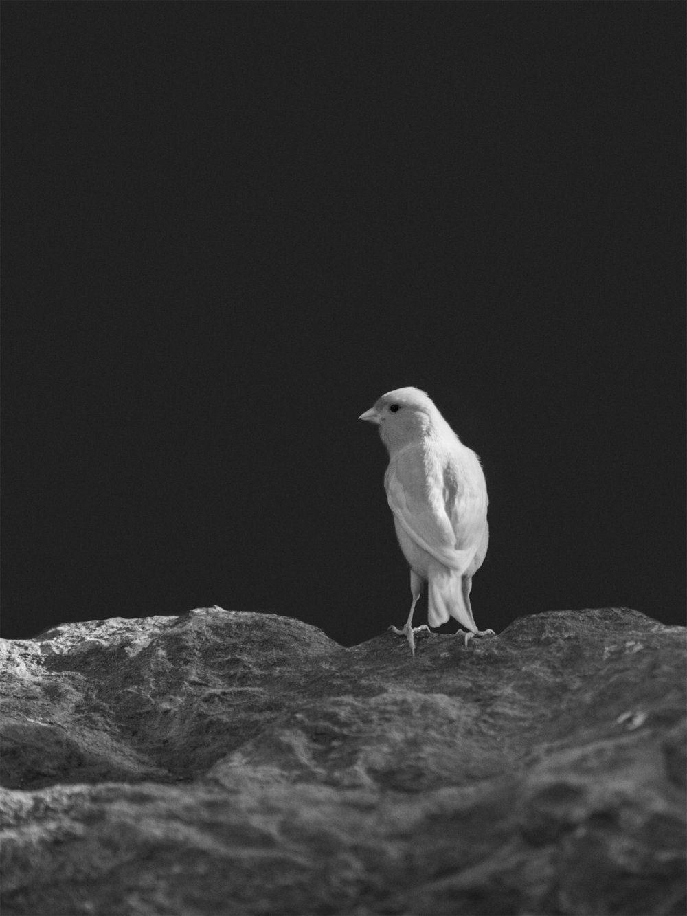 Tier_Mirjana Vrbaski_White Sparrow