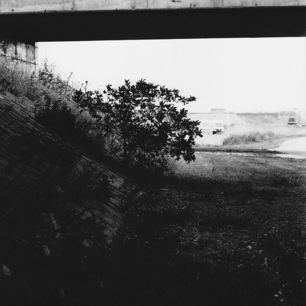 4. Gewone Vlier, Holterbergweg