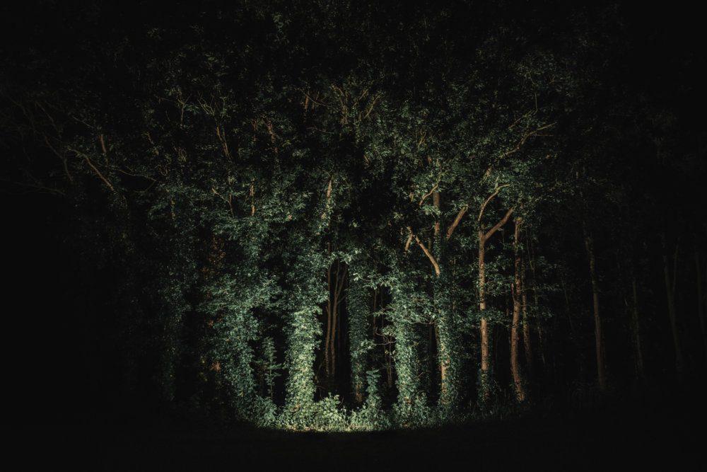 Michelle_Piergoelam_The_Woods