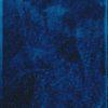 Stijve naaldvaren / Polystichum aculeatum, Peter Svenson en Arja Hop